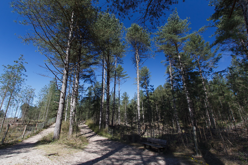 Forêt parc du Marquenterre