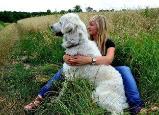 L'échange de garde d'animaux