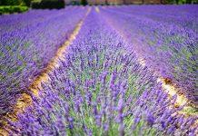 5 bonnes raisons de prendre sa retraite en Provence