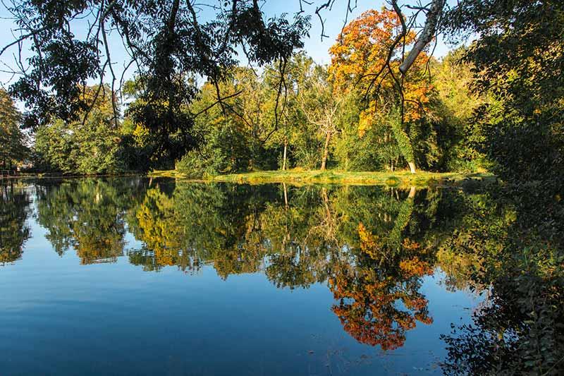 Les étangs du domaine de Sommedieue